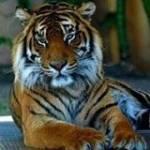 Shenaz Gauzel Profile Picture