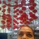 Rocio Diaz Profile Picture